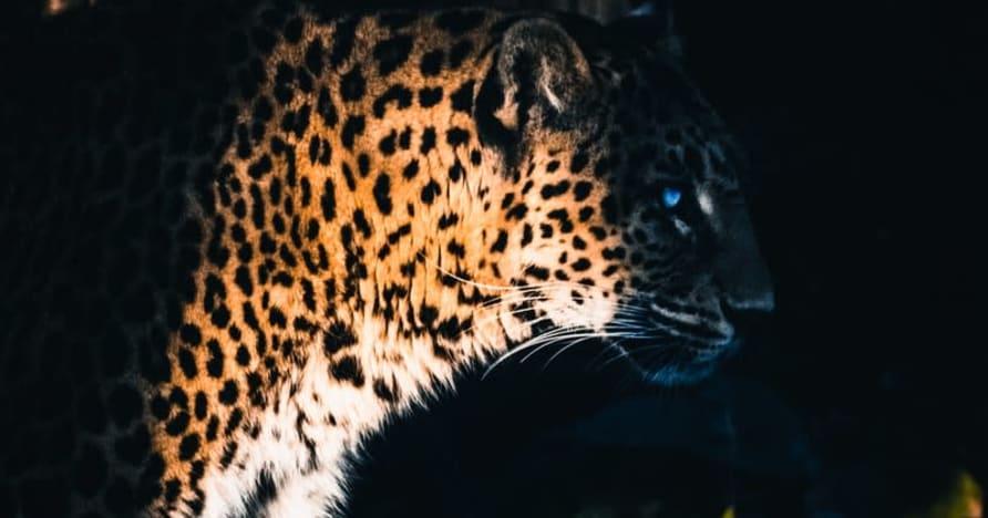 Το Yggdrasil Partners ReelPlay θα κυκλοφορήσει το Jaguar SuperWays από το Bad Dingo